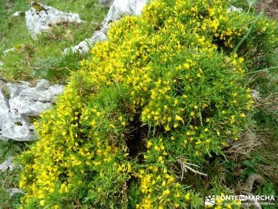 Descenso Sella - Lagos de Covadonga; album fotos viaje; puente del 12 de octubre;senderismo por libr